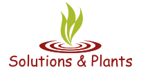 Solutions & Plants