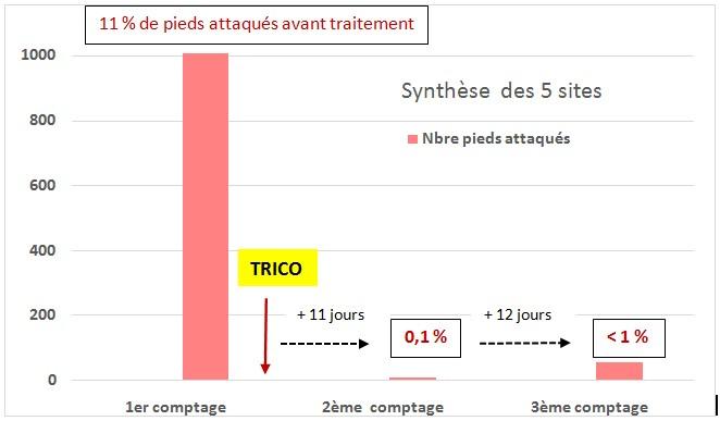 Trico Vigne Synthèse 5 sites