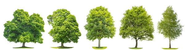 arbres haies TRICO